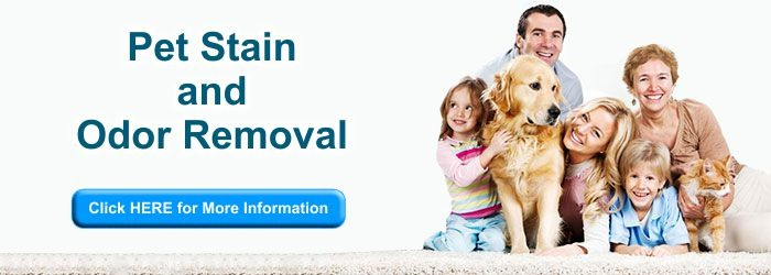 Pet Stains and Odor Removal Madison WI